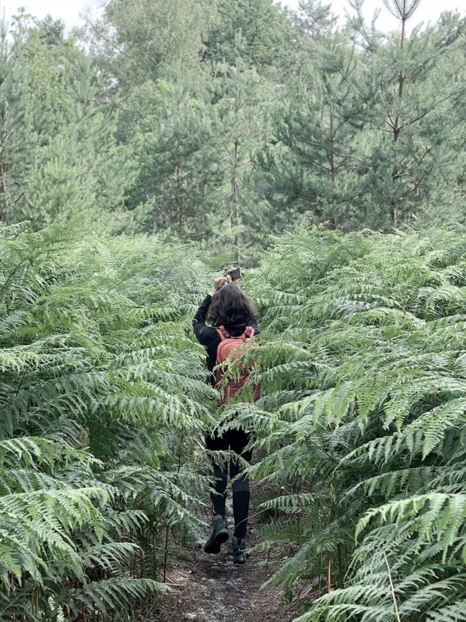 La jungle ? Non Fontainebleau !