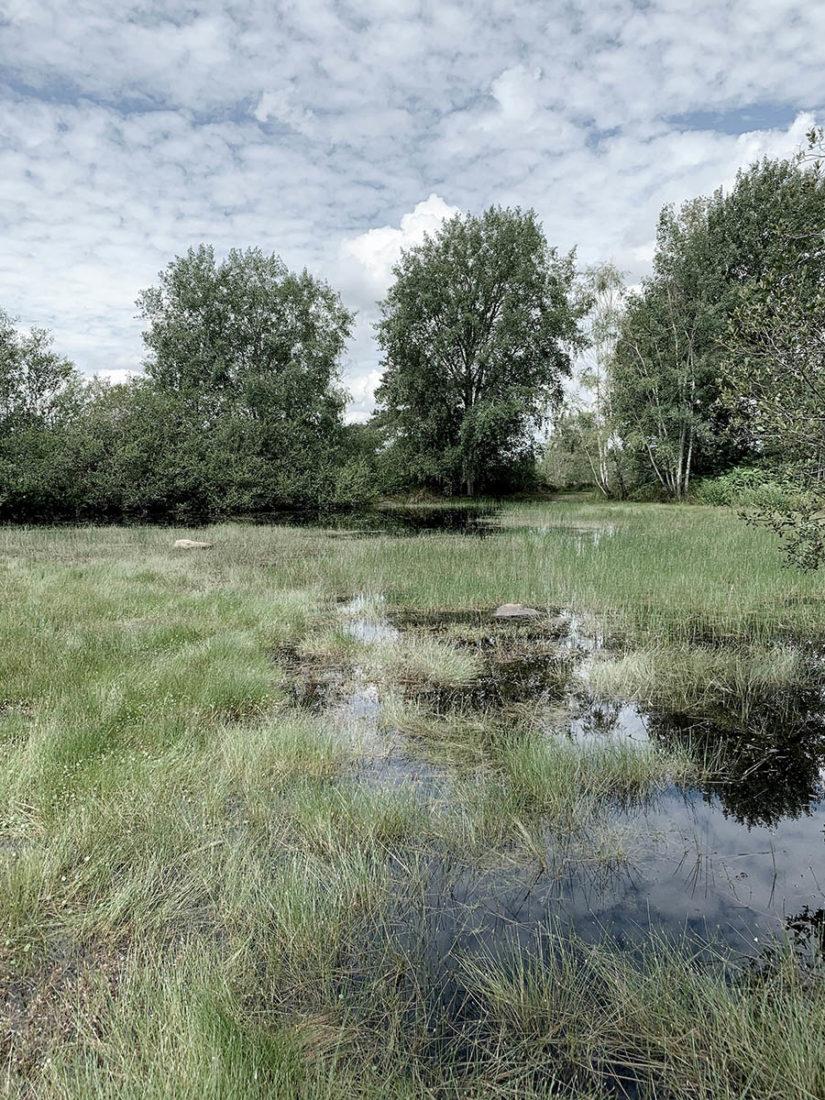 les marais de Fontainebleau en randonnée