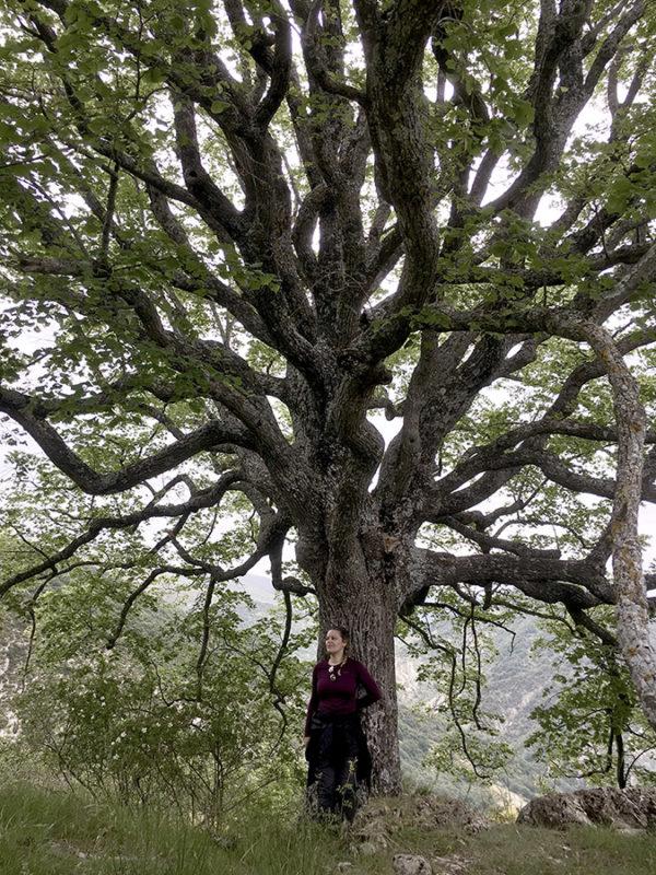 se relier au vivant sylvothérapie drôme séjour nature bien-être de Wacohe