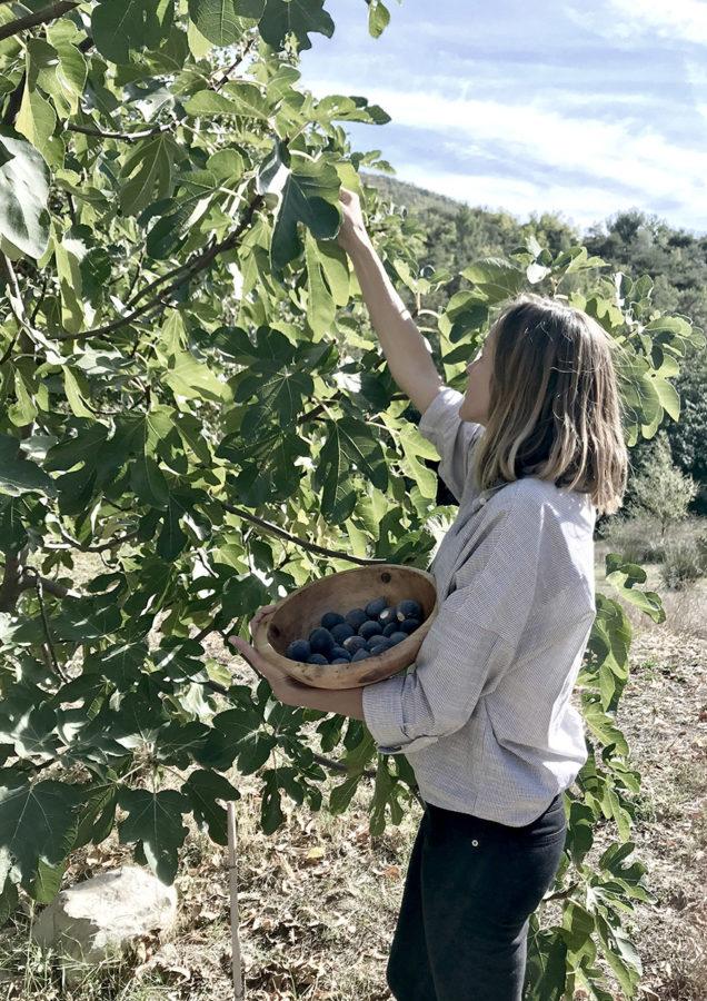 Cueillette de figues fraiches par Aurélie Fleschen en Drôme pour wacohe
