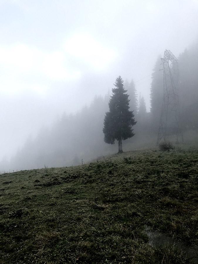 Sapins dans la brume en haute-savoie pour le séjour rando nature et retour aux sources de wacohe