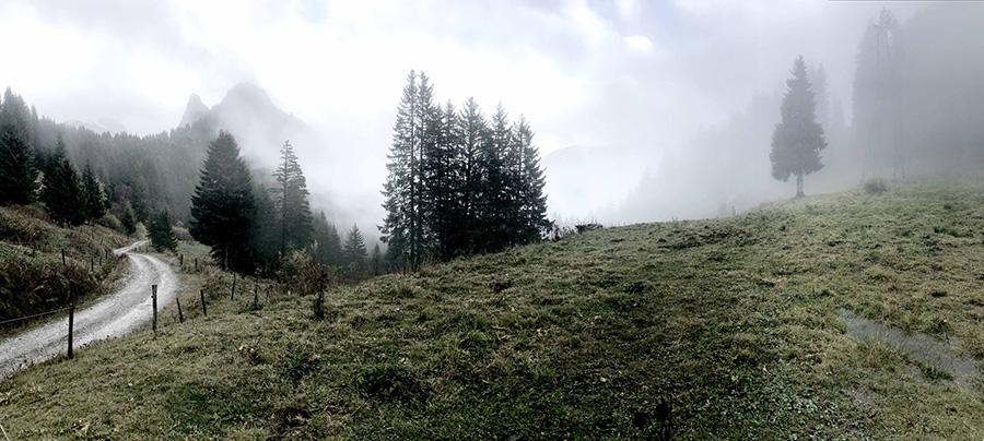 Sapins dans la brume de la Haute-Savoie