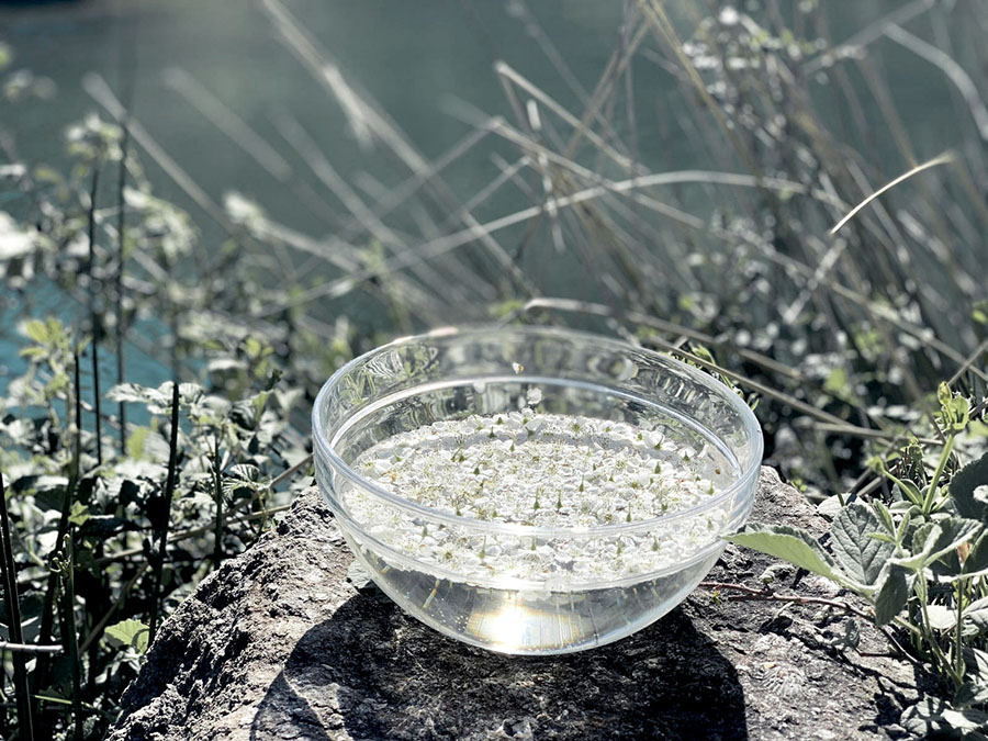 préparation eau florale d'aubépine en remède médicinal en drôme provençale avec Wacohe