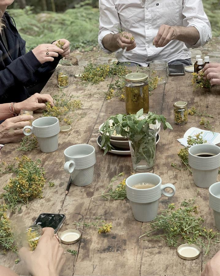 Preparation d'un macérat huileux de millepertuis lors s'un séjour rando botanique en cabane en forêt de Fontainebleau par wacohe