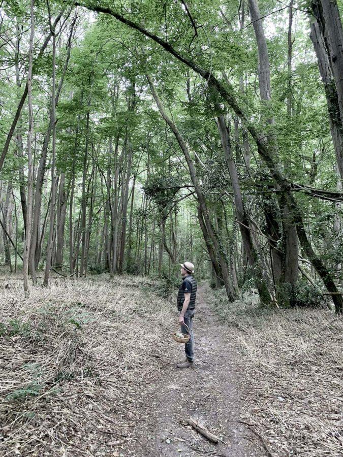 Cueillette de plantes sauvages comestibles et médicinales en forêt de Fontainebleau avec Wacohe