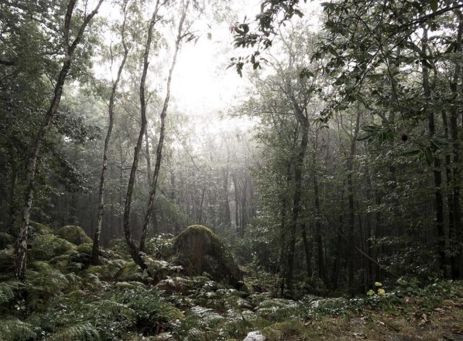 Vue de la cabane en pleine forêt près de Fontainebleau pour les séjours wacohe