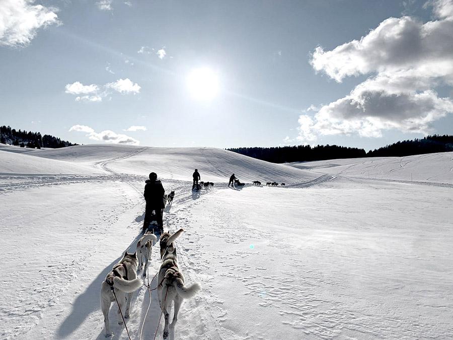 Conduire son propre attelage de chiens de traineaux lors d'un séjour musher dans le Jura par Wacohe