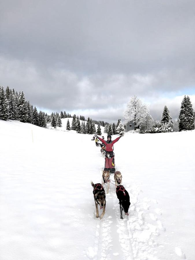 Chiens de traineaux lors d'un séjour musher dans le Jura par Wacohe