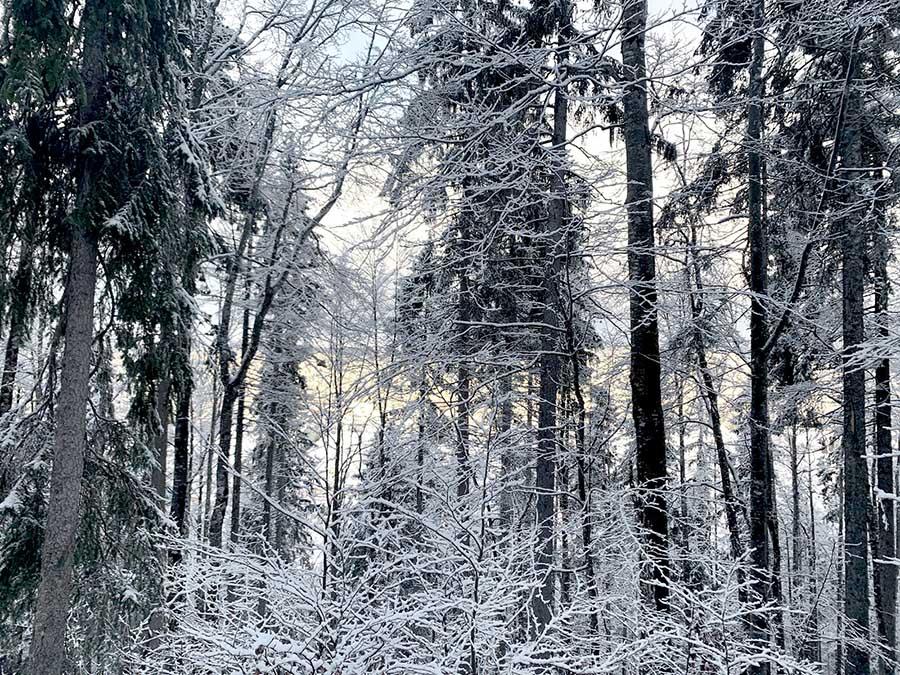 Paysage enneigé dans le Jura lors d'un séjour chiens de traineaux par Wacohe