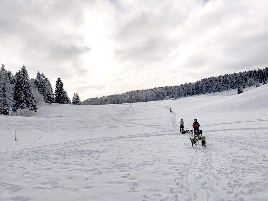 Chiens de traineaux lors d'un séjour nature et bien être dans le Jura par Wacohe