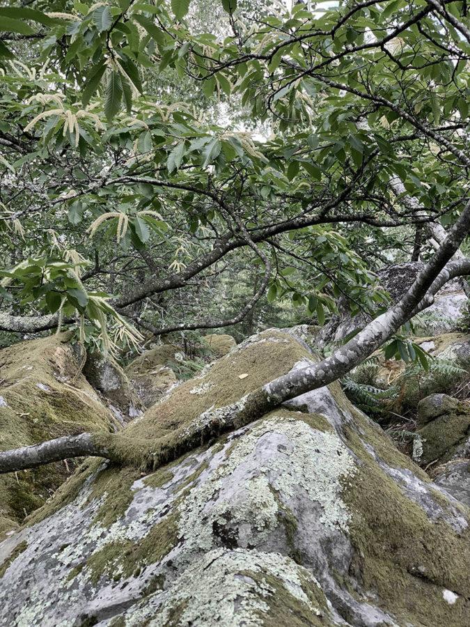 Rando healthy botanique et détox en forêt de Fontainebleau près de Paris par wacohe