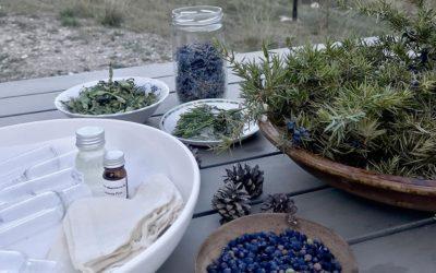 rando botanique et healthy en cabane dans la foret de fontainebleau